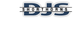 DJS Shorthorns